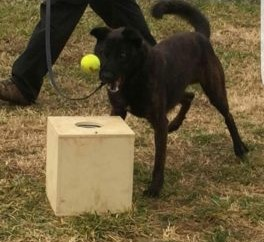 Detection Dog Image